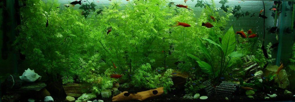 Aquarium Tank filled with numerous live plants