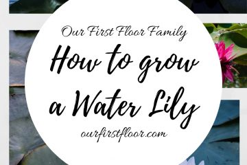 How to grow a water lily