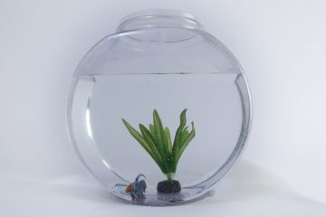 Betta Fish In A Bowl
