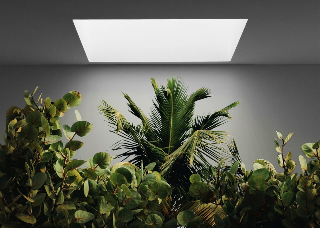 light and plants below
